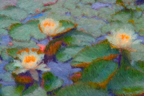 Water Lily Impressions.jpg