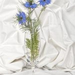 LOVE IN A MIST by Robin Simmons, LRPS