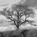 TREE MONOCHROME by David Cunnane